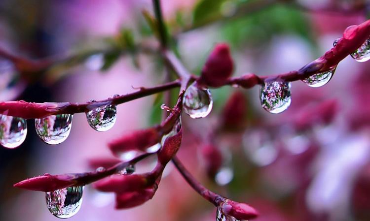 9-dew-drops-reflection